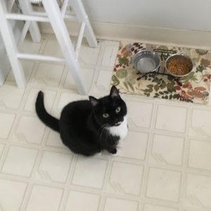 Cat picture sq